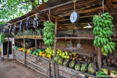 Vendeur de fruits et légumes sur la route