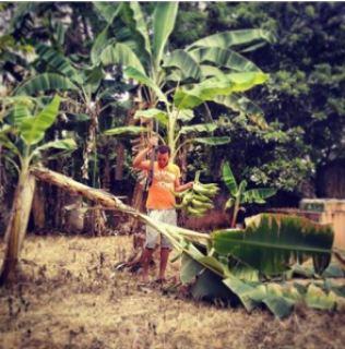 bananiers jardin en République Dominicaine machette